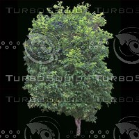 tree-02-12