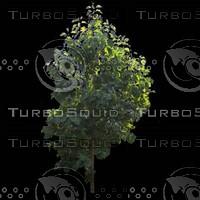 tree-02-13