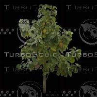 tree-02-39