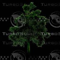 tree-02-47