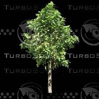 tree-02-48