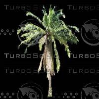 tree-03-04