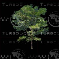 tree-03-12