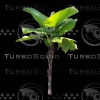 tree-03-17