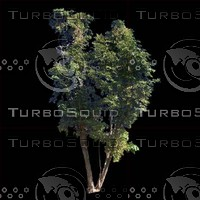 tree-03-18