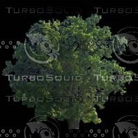 tree-03-19