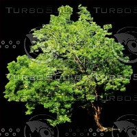 tree-03-21