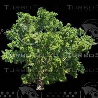 tree-03-23