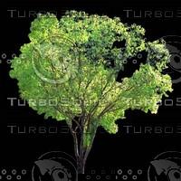 tree-03-25