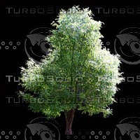 tree-03-26