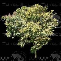 tree-03-27