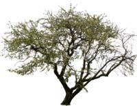 tree52