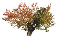 tree61