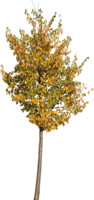 tree70