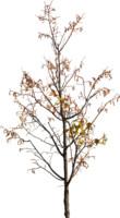 tree73