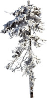 tree76