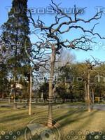Tree 20090121a 045