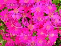 Flower 20090405 007