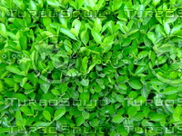 Green Plant 20090409 026
