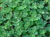 Green Plant 20090409 050