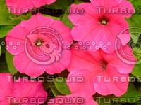 Flower  20090423 081