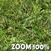 Grass texture # 5