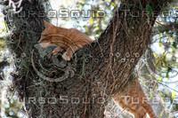 Cat Hunting in Tree.jpg