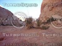 Las Vegas Desert Rock & Brush 3.jpg