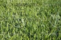 SPX_Grass003