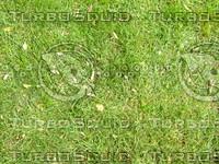 Lawn cz4 065