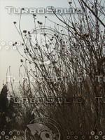 Plants Landscape  cz5 241