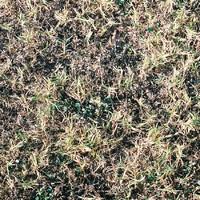 dead_grass.png
