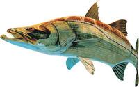 fish 8.ai
