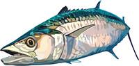 fish 9.ai