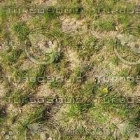Grass texture # 2
