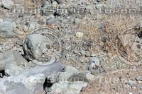 Closeup of field rocks