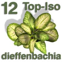 Top Views - dieffenbachia