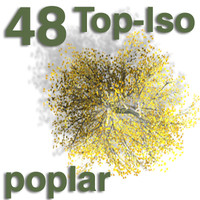 Top Views - poplar