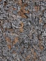 tree bark 2a2c.jpg