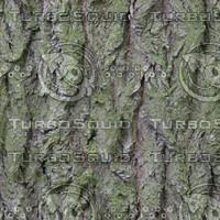 tree bark green D4.jpg