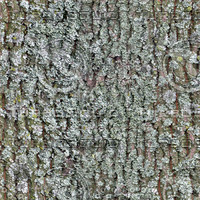 tree bark lichen.jpg