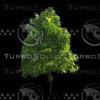 tree-02-10