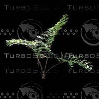 tree-02-24