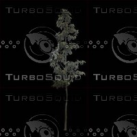 tree-02-40