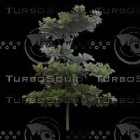 tree-02-41