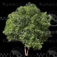 tree-03-28