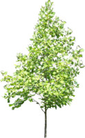 tree57