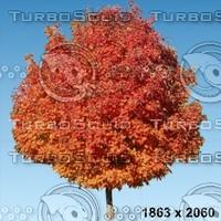 02_tree_autumn003.zip