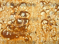 Rusty Metal   20090101a 023