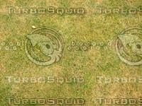 Lawn  20090119 102
